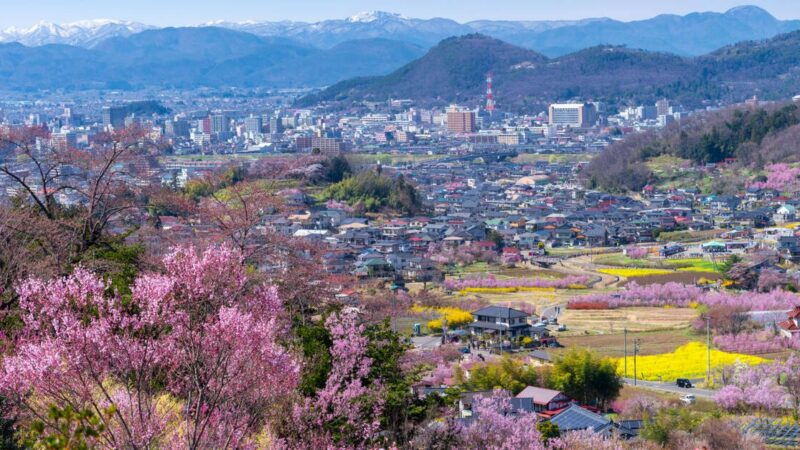 Without humans biodiversity is blooming in Fukushima power plant!